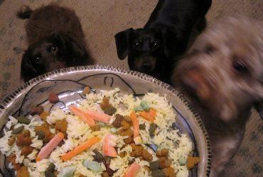 Best Homemade Dog Food and Meals for Bernedoodles
