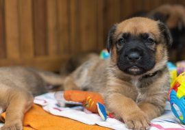 The Ultimate Checklist for Dog-Proofing Your Home