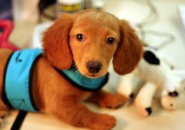 Shop before you adopt – Checklist for would-be pet parents