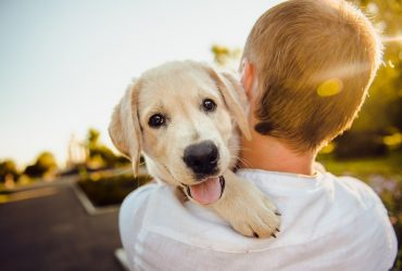 5 Ways To Keep Your Dog Healthy and Happy
