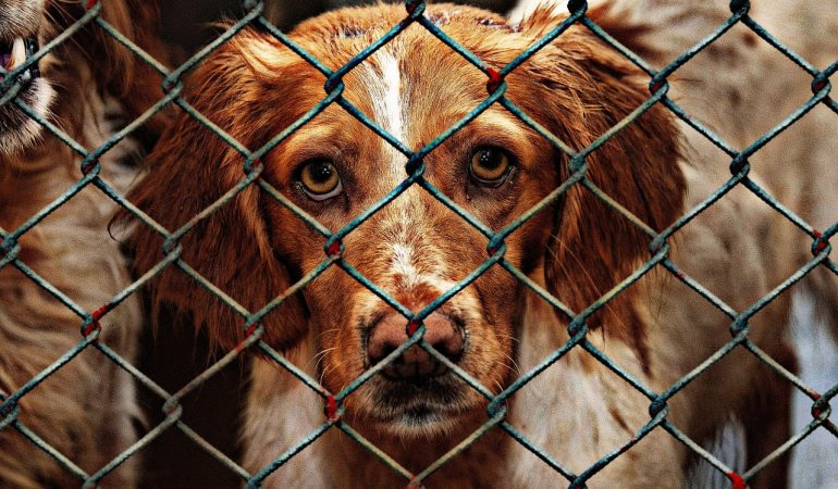 Why Should You Adopt a Dog from Shelter?