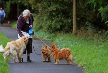 11 Best Dog Breeds For Elderly Citizens