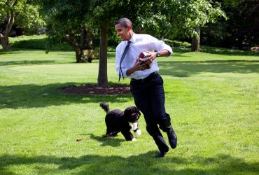 All About the US Presidents' Dogs [Full List]