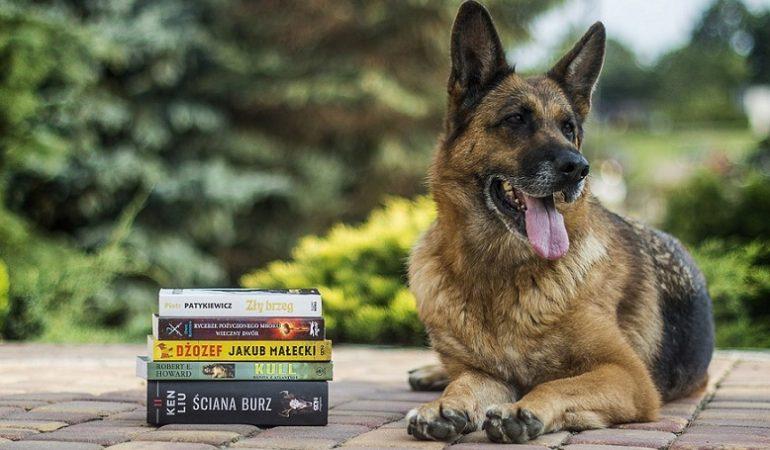 11 Weirdest Dog Laws around the World