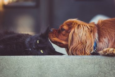 5 Best Cat-Friendly Dog Breeds