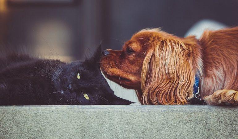 5 Best Cat-Friendly Dog Breeds