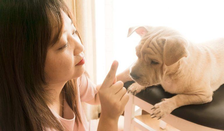 Secrets of Raising a Happy Dog Amid the Pandemic