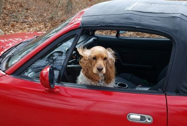 Going for a road trip with your furry pal? Ensure safety and security first!