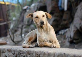 How a Street Dog Saved My Life