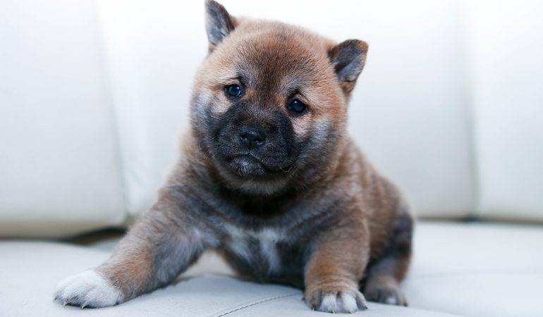 Puppy First Day Home – Do's, Don'ts, & Preparation