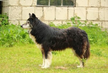 Top 10 Unique Shepherd Dog Breeds