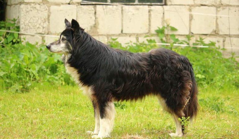 Top 10 Unique Shepherd Dog Breeds