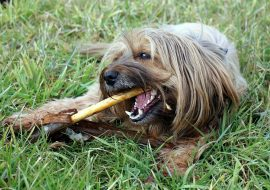4 Ways to Prevent Bad Breath in Dogs