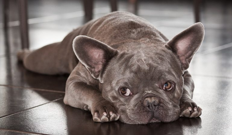 6 Reasons Why Your Furry Friend Needs CBD