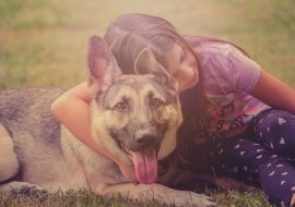 8 Reasons to Choose a German Shepherd