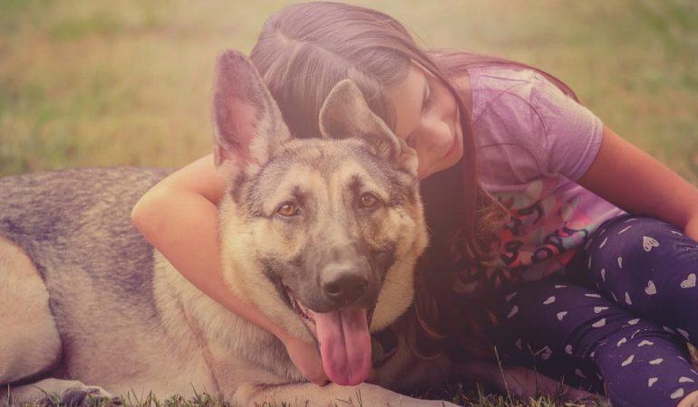 8 Reasons to Choose a German Shepherd