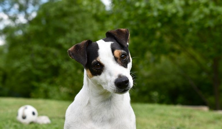 Small Dog Syndrome: What is it? How do you avoid it?