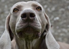 Can Dogs See Ghosts and Sense the Supernatural?