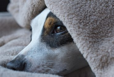 Signs Your Dog Is Struggling With a Sleep Disorder