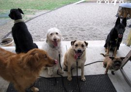 How to find a reliable pet boarding service for your dog?