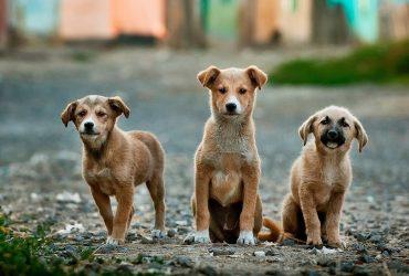 German Dog Names – Top 100 Picks for 2021