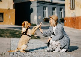 7 Must-Know Dog Care Tips for UK Dog Owners
