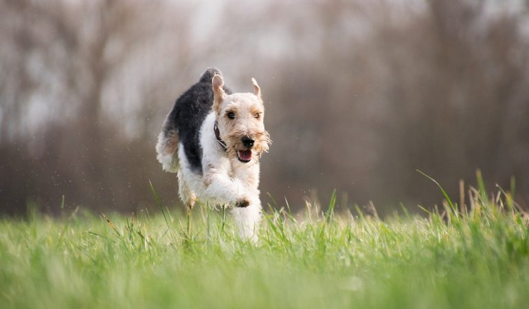 10 Tenacious Terrier Breeds You Should Know About