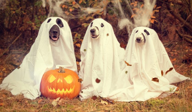 11 Best Dog Halloween Costumes for 2019
