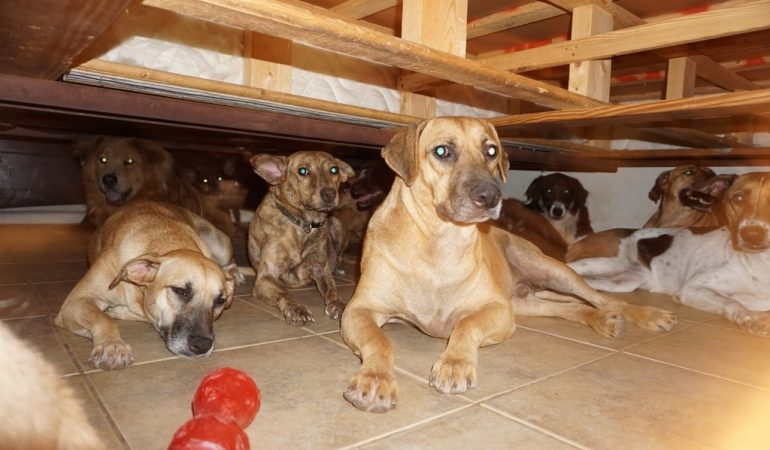 How This Woman Saved About 100 Dogs From Hurricane Dorian