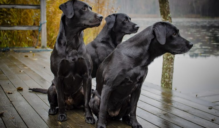 Black Dog Names – 200+ Perfect Ideas for 2021