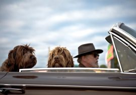 Going on a Vacation With Your Dog- Things To Take Care Of