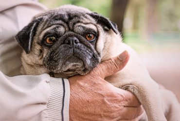 How a Pug transformed the life of a retiree