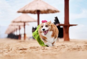 200+ Unique Corgi Names with Meanings for 2021