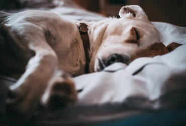 7 Common Puppy Health Issues to Watch For