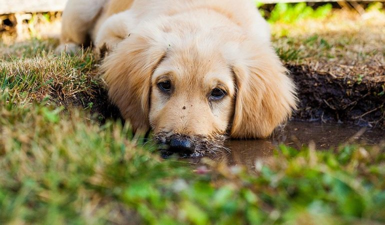 How Your Pet Dog Can Damage Your Lawn