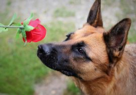 How to Teach Your Dog Scent Detection