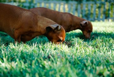 Why Do Dogs Eat Poop and How to Deal With it?