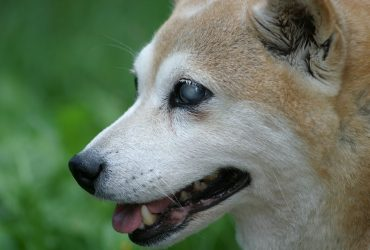 How to Take Care of Deaf and Blind Dogs
