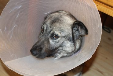 WHO Confirms First Dog With Coronavirus Positive
