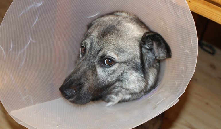 Most Common Infections in Dogs: How to Treat and Prevent Them