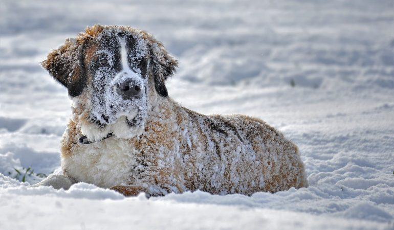 Top 7 Misconceptions & Myths About Dogs and Winter